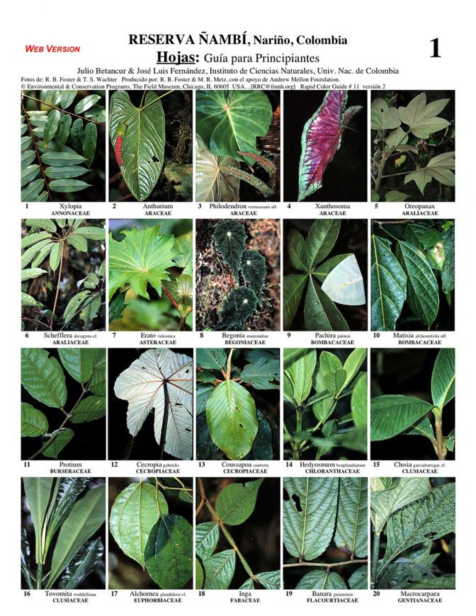 Nariño -- Reserva Ñambi Leaves for beginners