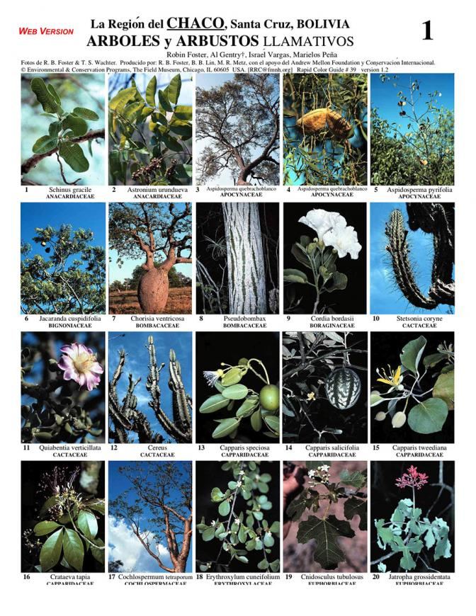 Santa Cruz -- Chaco Trees & Shrubs