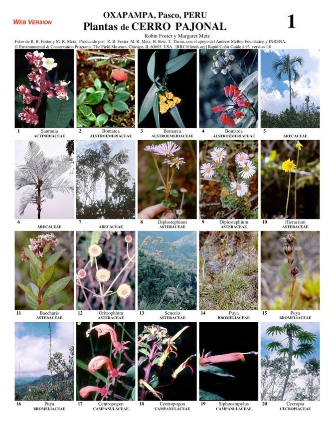 Pasco -- Yanachaga, Cerro Pajonal Common Plants