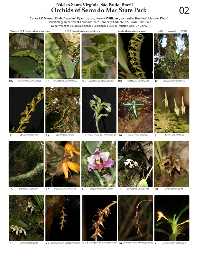 1000_brazil_serra_do_mar_orchidaceae.pdf