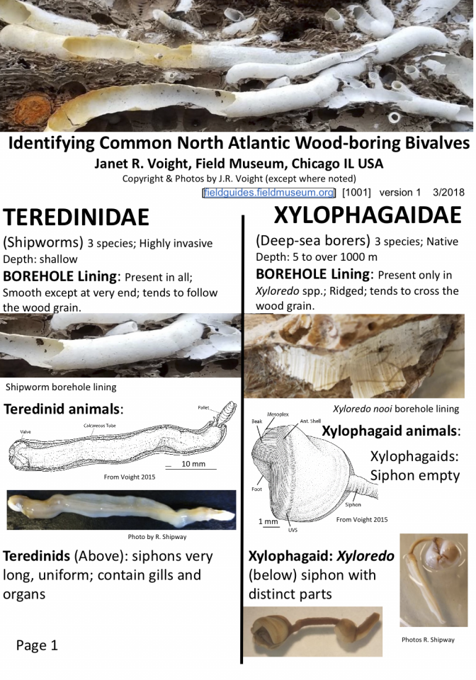 1001_north_atlantic_wood-boring_bivalves.pdf