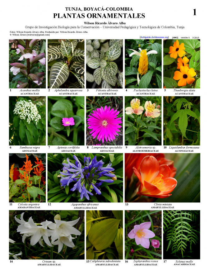 1002_colombia_ornamental_plants_of_tunja.pdf