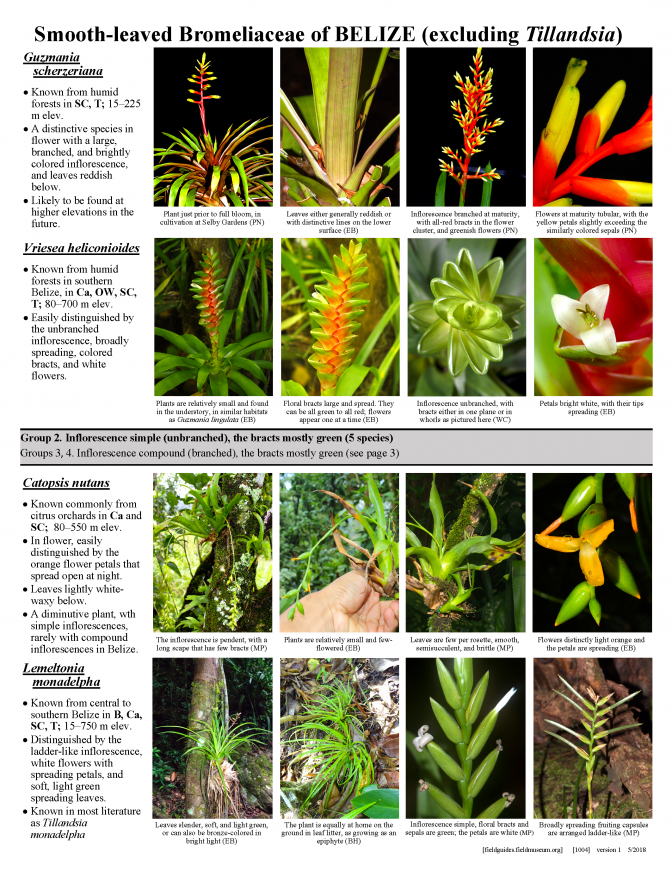1004_belize_smooth-leaved_bromeliaceae.pdf
