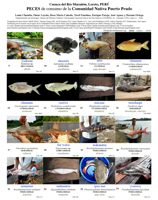 1012_peru_fishes_of_puerto_prado.pdf