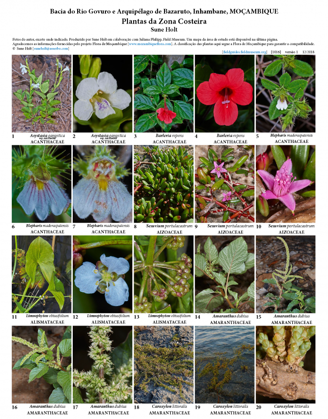 1016_mozambique_coastal_plants_of_govuro_river_and_bazaruto_archipelago_.pdf