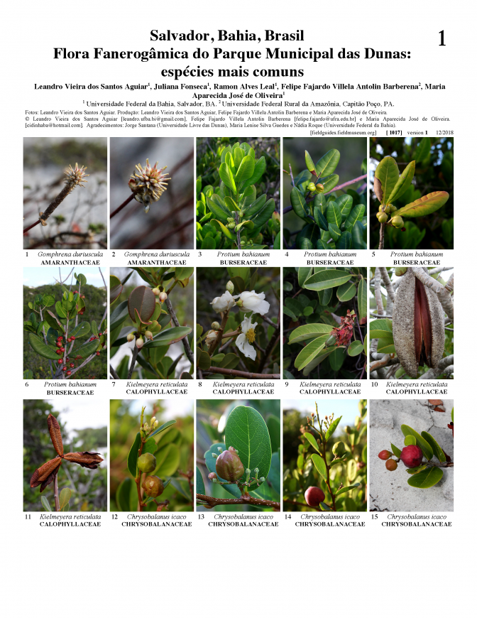 1017_brazil_phanerogamic_flora_of_the_municipal_park_of_the_dunes.pdf