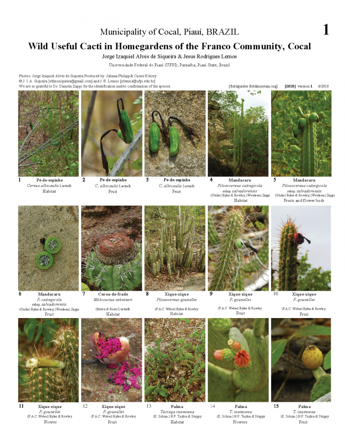 1018_brazil_wild_useful_cacti_of_franco.pdf