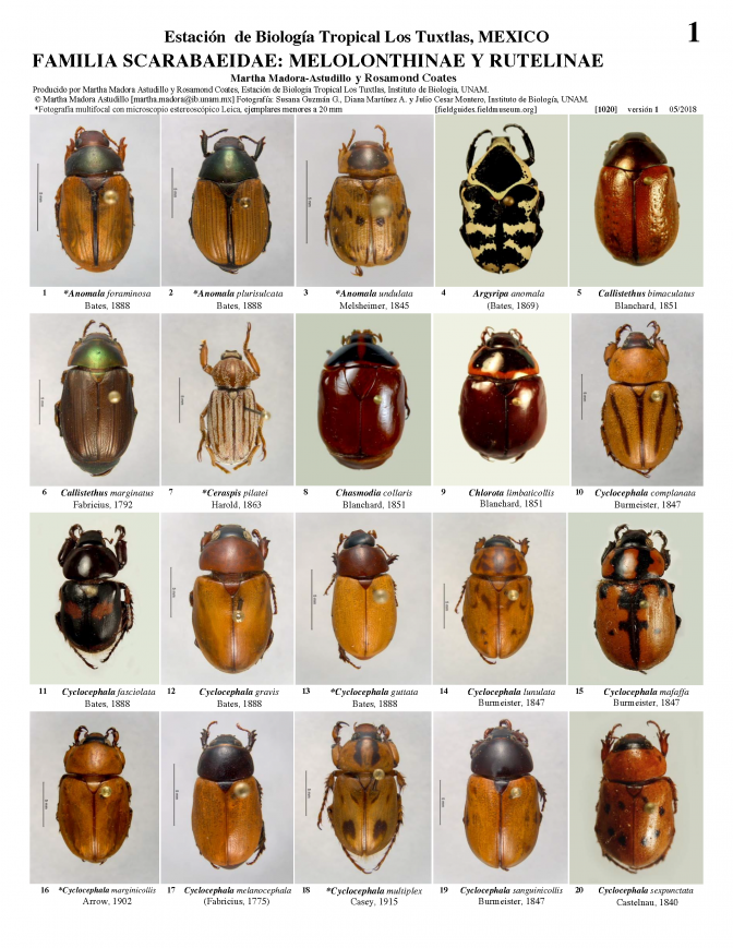 1020_mexico_melolonthinae_and_rutelinae.pdf