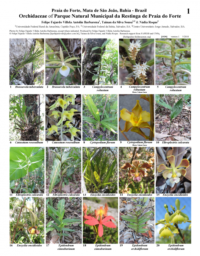 1036_brazil_orchidaceae_of_praia_do_forte.pdf