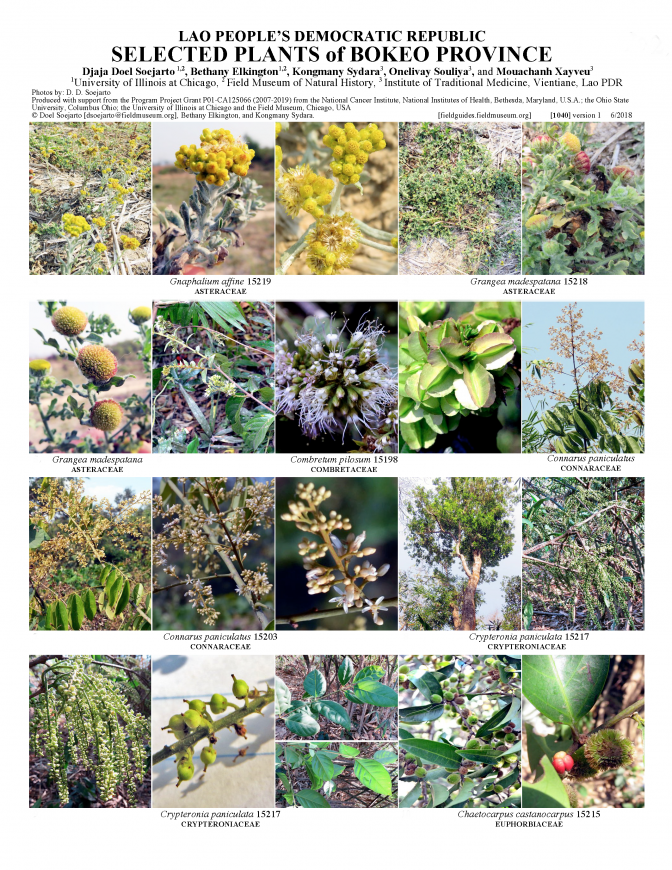1040_lao_plants_of_bokeo_province.pdf