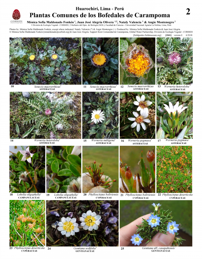 1041_peru_common_plants_of_carampoma.pdf