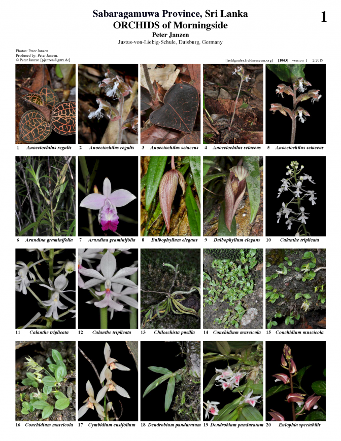 1043_sri_lanka_orchids_of_morningside.pdf