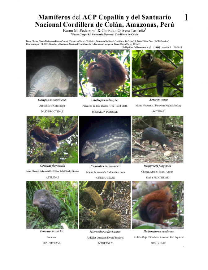1044_peru_mammals_of_copallin_and_colan.pdf