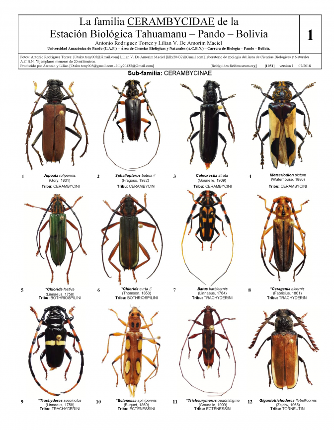 1051_bolivia_cerambycidae_of_tahuamanu_biological_station.pdf