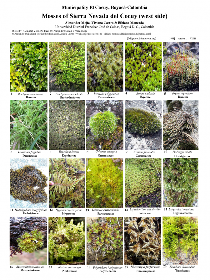 1053_colombia_mosses_of_nevada_del_cocuy.pdf