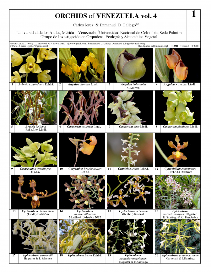 1054_orchids_of_venezuela_vol_4.pdf