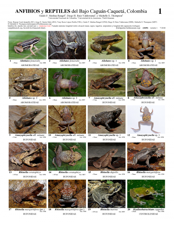1059_colombia_amphibians_and_reptiles_of_bajo_caguan-caqueta.pdf