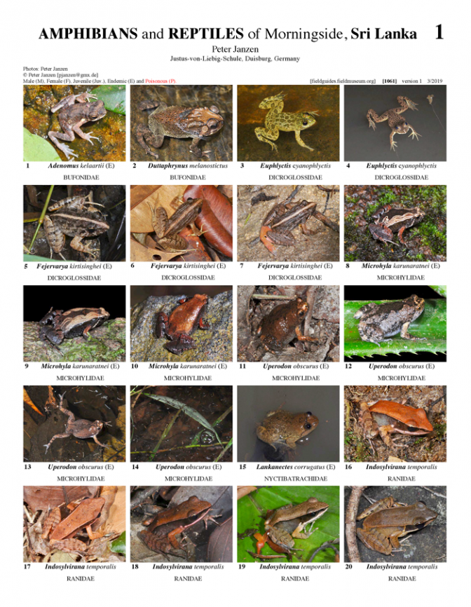 1061_sri_lanka_amphibians_and_reptiles_of_morningside.pdf