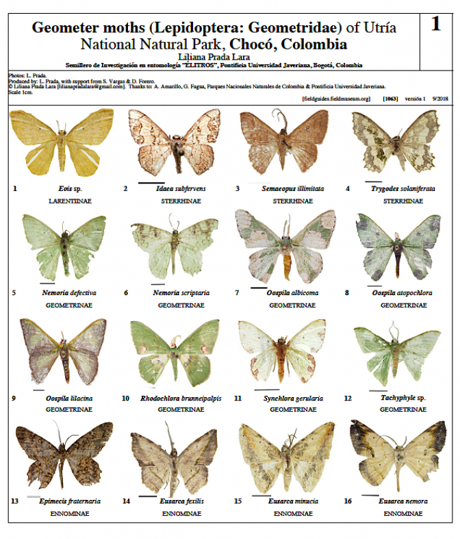 1063_colombia_geometer_moths_of_utria.pdf