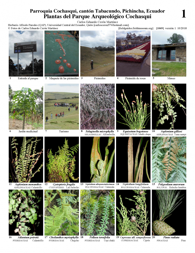 1069_ecuador_plants_of_cochasqui_archeological_park.pdf
