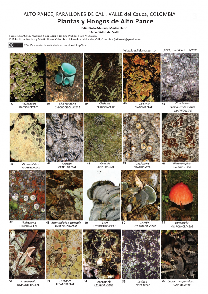 1072_colombia_plants_and_fungi_of_alto_pance.pdf