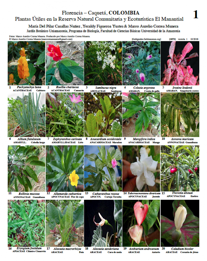 1073_colombia_useful_plants_of_el_manantial_reserve.pdf