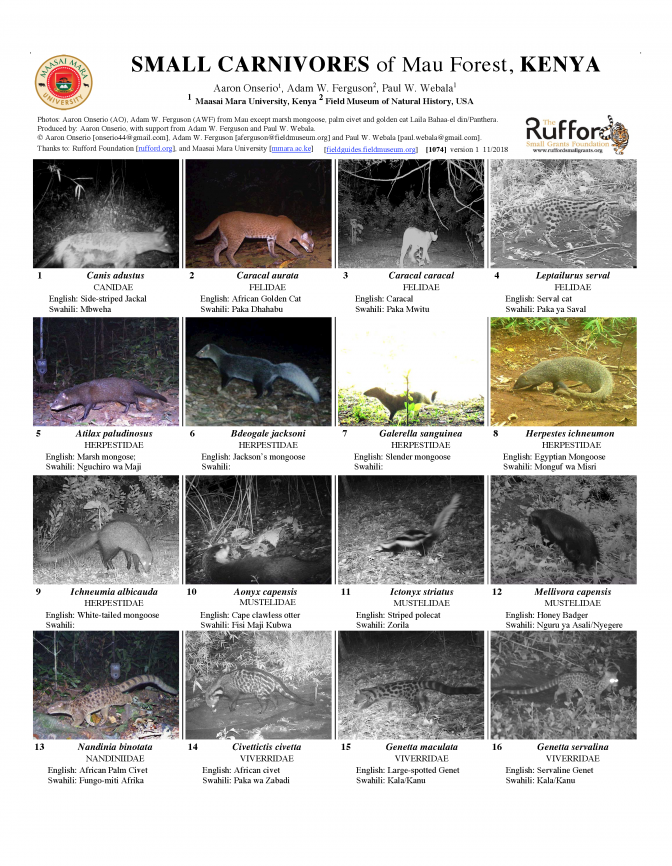 1074_kenya_small_carnivores_of_mau_forest.pdf