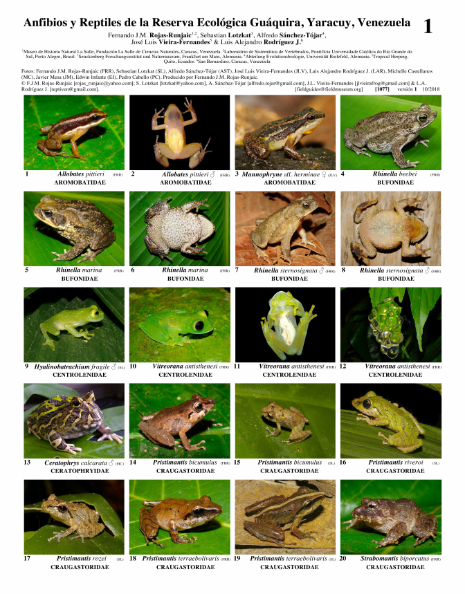 1077_venezuela_amphibians_and_reptiles_of_guaquira.pdf