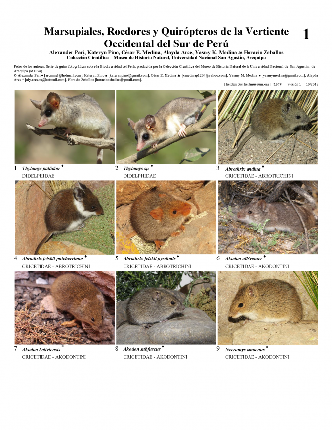 1079_peru_marsupials_rodents_and_chiroptera.pdf