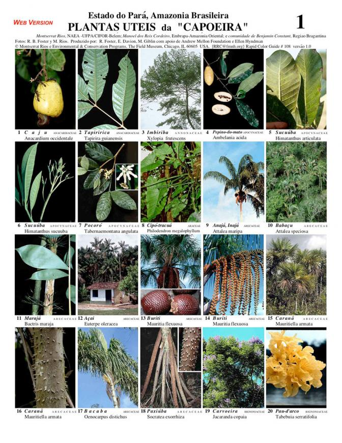 Pará -- Useful Plants da Capoeira