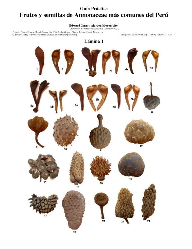 1083_peru_common_fruits_and_seeds_of_annonaceae.pdf
