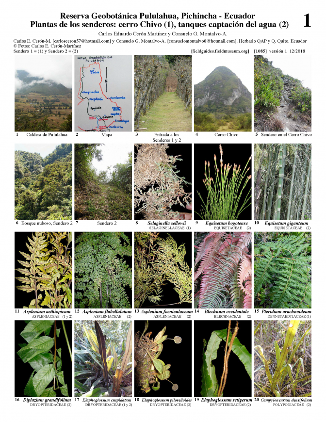 1085_ecuador_plants_of_trails_1_and_2_of_the_pululahua_reserve.pdf