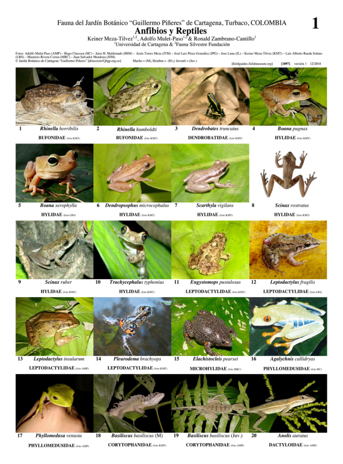 1087_colombia_amphibians_and_reptiles_of_catargena_botanical_garden.pdf