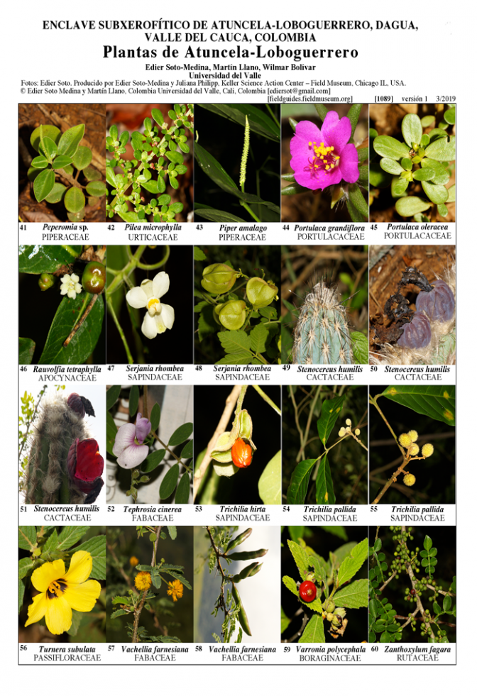 1089_colombia_plants_of_atuncela-loboguerrero.pdf