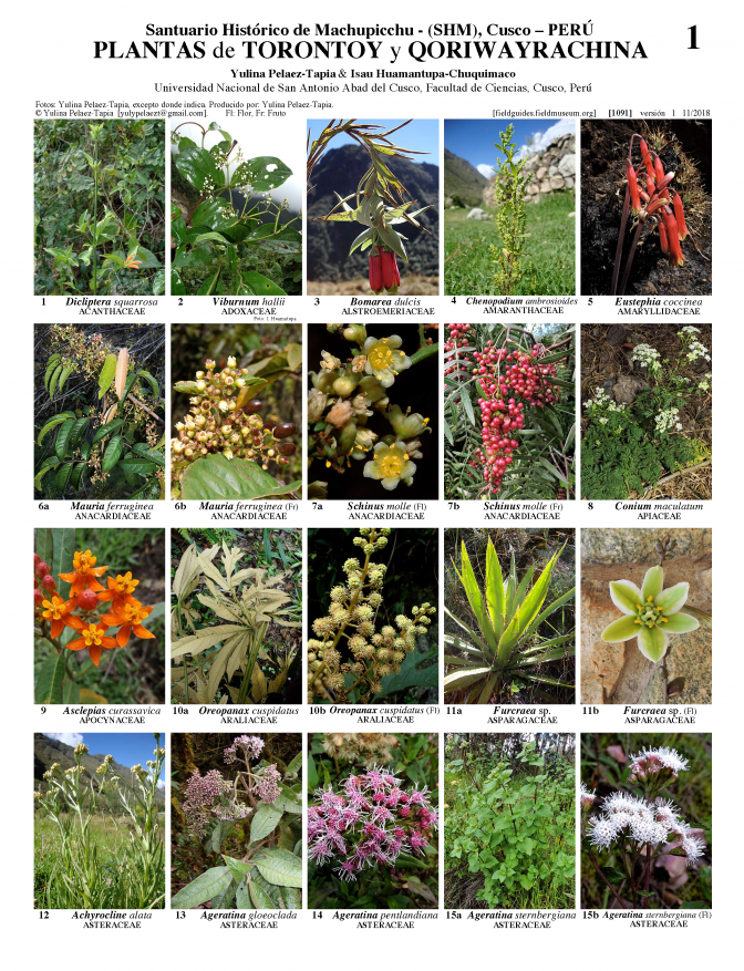1091_peru_plants_of_torontoy_and_qorihuayrachina.pdf