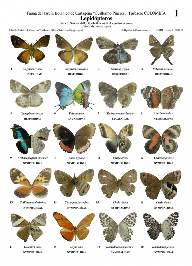 1093_colombia_lepidoptera_of_the_botanical_garden_of_cartagena.pdf