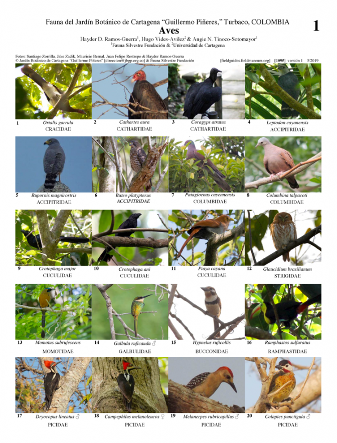 1095_colombia_birds_of_del_cartagena_botanical_garden.pdf