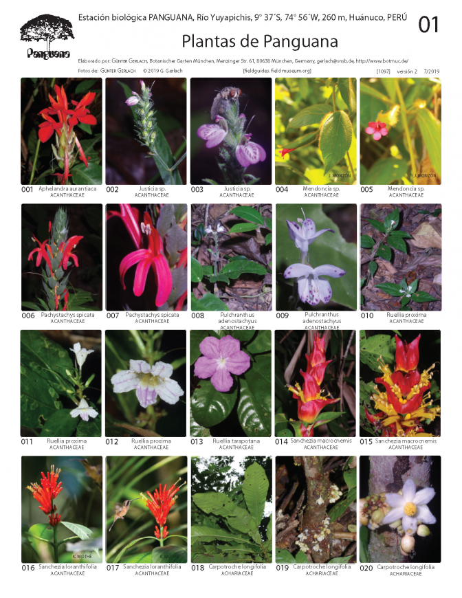 1097_peru_plants_of_panguana.pdf