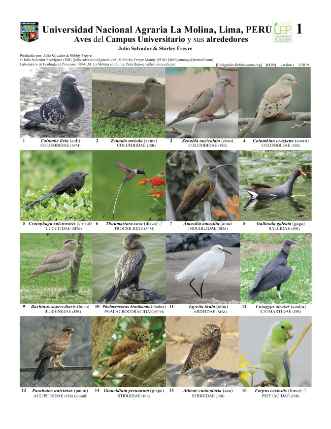 1100_peru_birds_of_campus_de_la_universidad_agraria_la_molina.pdf
