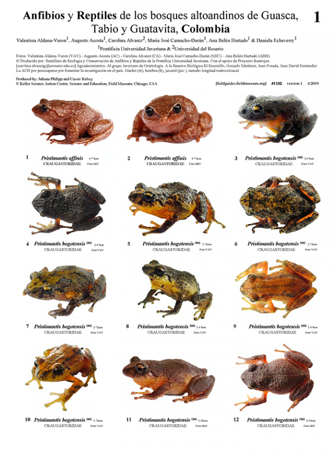 1102_colombia_amphibians_and_reptiles_of_guasca_tabio_and_guatavita.pdf