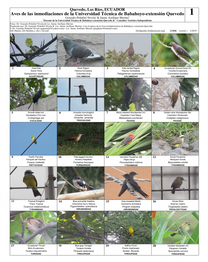 1104_ecuador_birds_of_universidad_tecnica_de_babahoyo.pdf