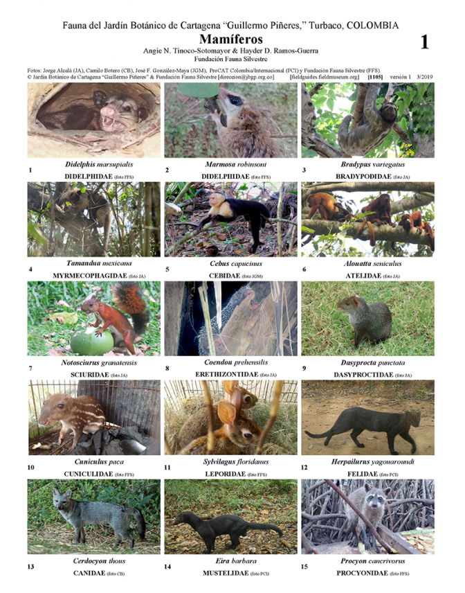 1105_colombia_mammals_of_the_botanical_garden_of_cartagena.pdf