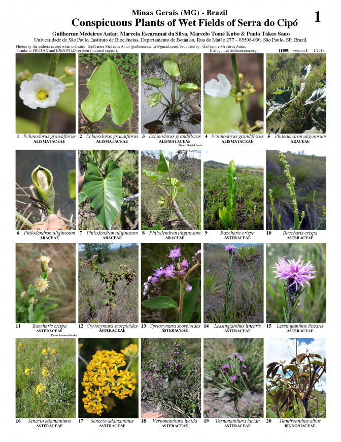 1108_brazil_plants_of_wet_fields_of_serra_do_cipo.pdf