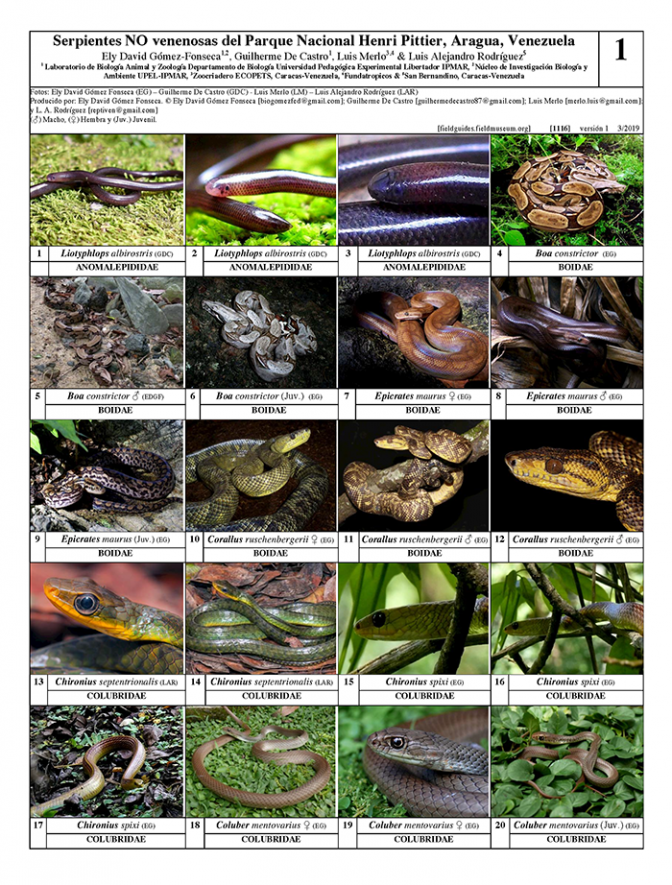1116_venezuela_non-venomous_snakes_from_henri_pittier_national_park.pdf