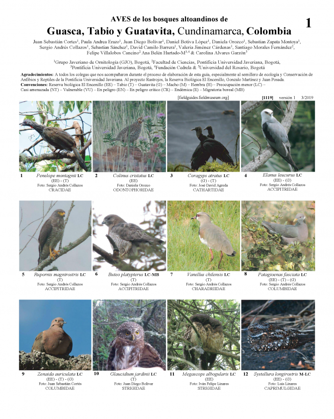 1119_colombia_birds_of_guasca_tabio_and_guatavita.pdf
