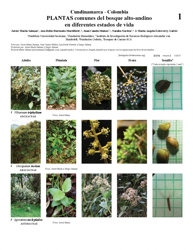 1124_common_plants_in_different_states_of_life.pdf