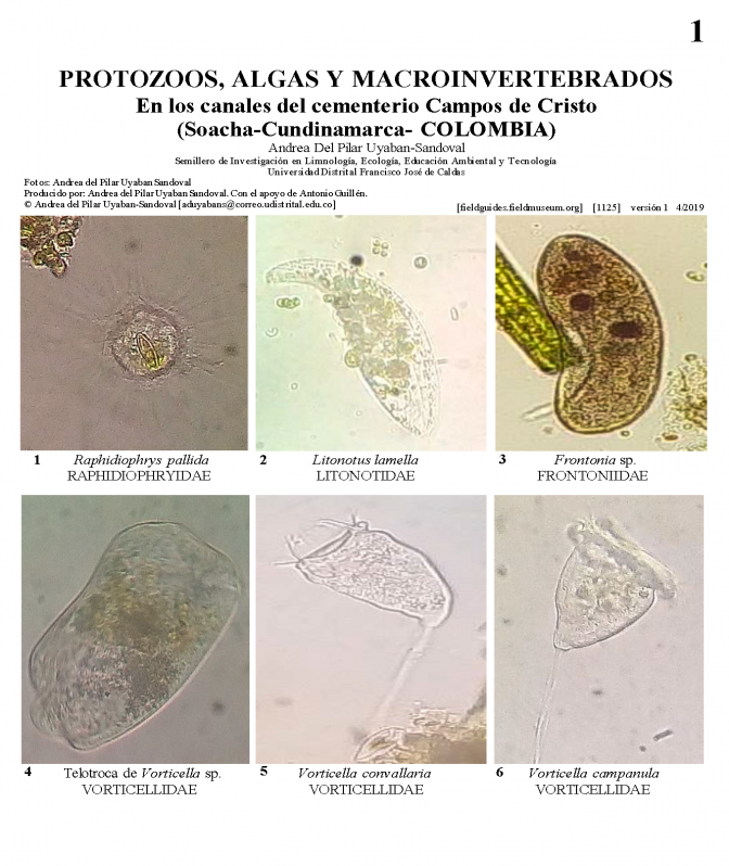 1125_colombia_protozoa_algae_and_macroinvertebrates_of_the_campos_de_cristo_cemetery.pdf