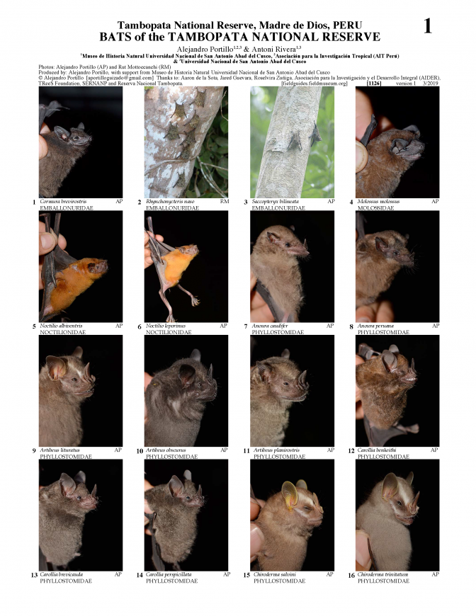1126_peru_bats_of_the_tambopata_national_reserve.pdf