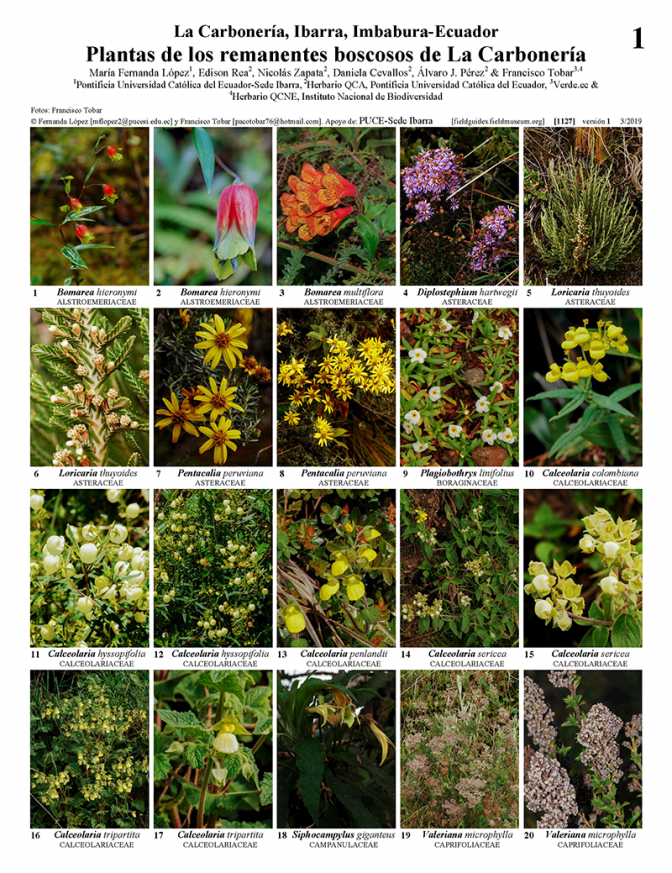1127_ecuador_plants_of_la_carboneria.pdf