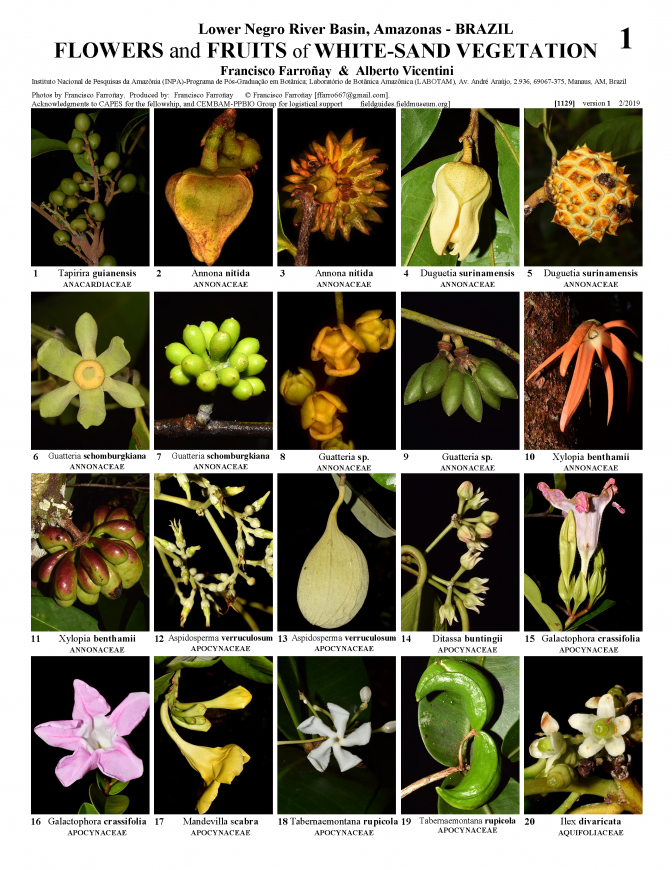 1129_brazil_white_sand_vegetation_flowers_and_fruits.pdf